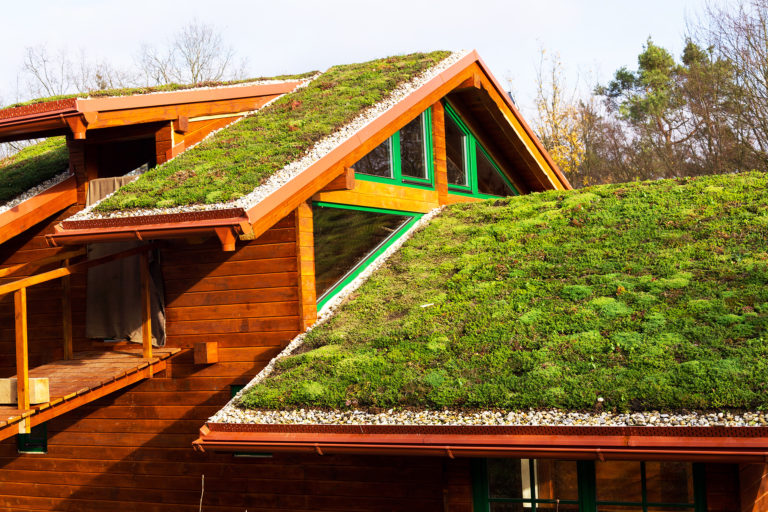 A photo of living vegetation on a roof.
