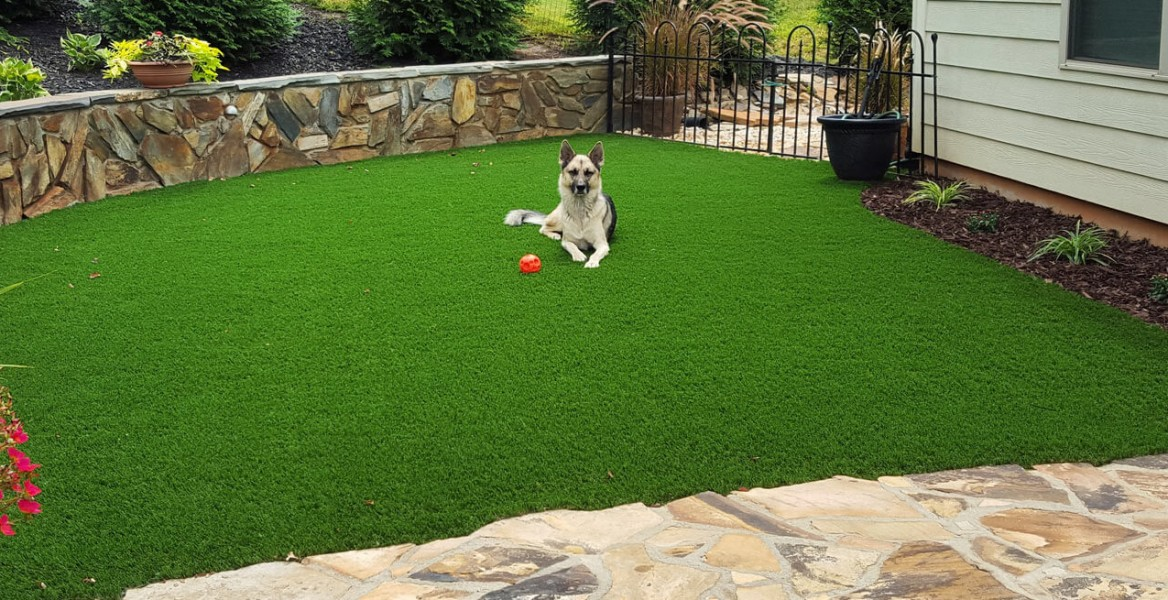 A dog laying on artificial turf in a backyard.
