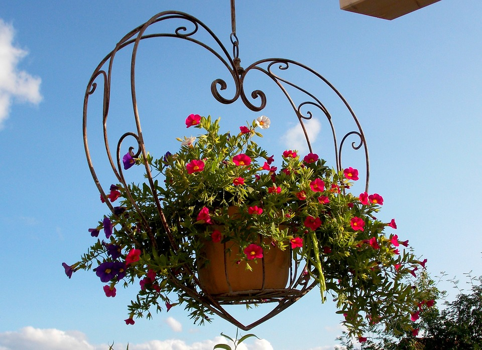 A photo of a hanging plant basket in a heart-shaped frame.
